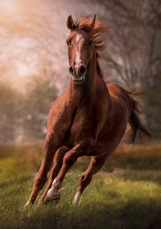 PUZZLE  1500 HQC THE HORSE